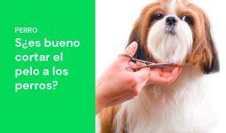 ¿Es bueno cortar el pelo a los perros en verano?