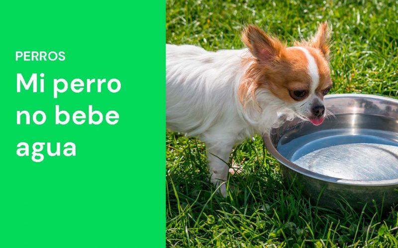 Mi perro no bebe agua